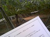 TS380997_160.JPG